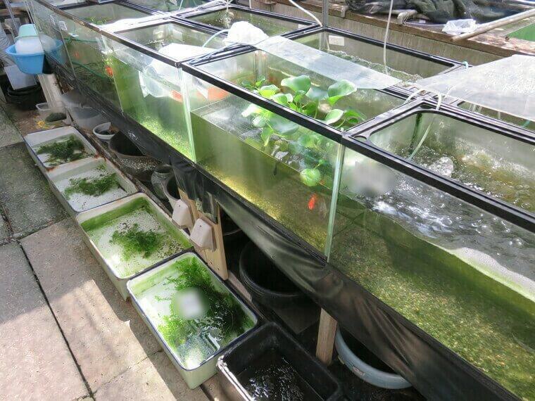 佐々木養魚場