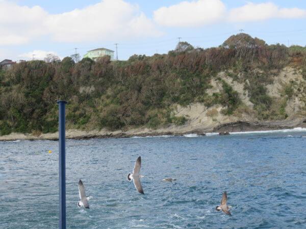 水中観光船 にじいろさかな号