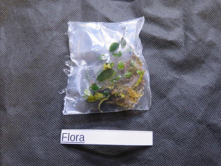 チャーム Flora