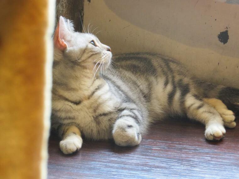 猫カフェ ミネット