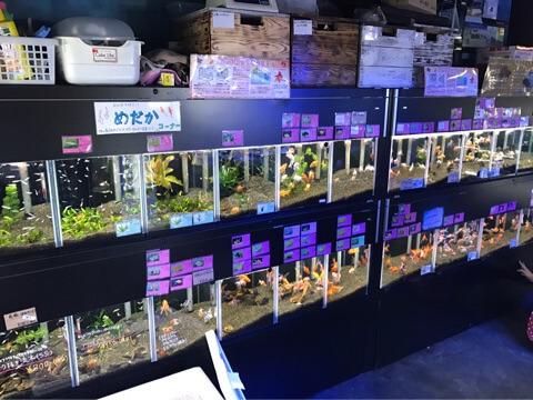 ペットの専門店コジマ ベイタウン横浜本牧店