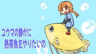 ユウマの静かに熱帯魚をやりたいのアイキャッチ画像