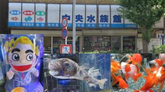 中央水族館