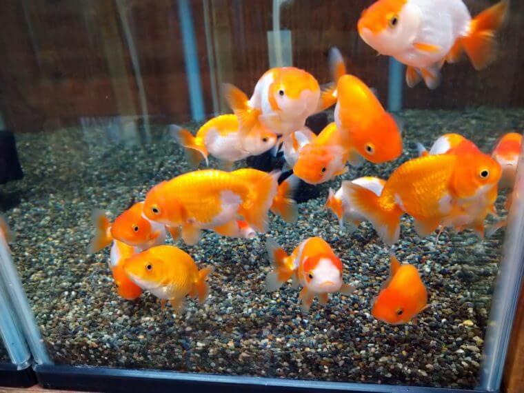 Deedbox aquarium