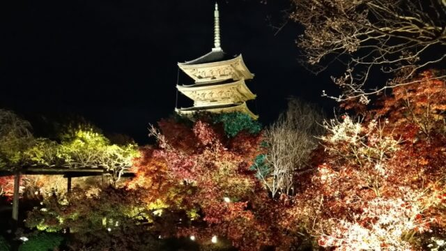 京都のアクアショップ