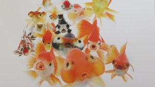 踊る金魚展 2020