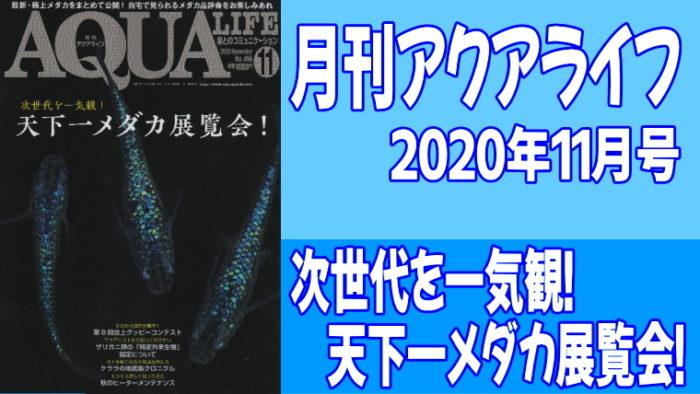 月刊アクアライフ2020年11月号「天下一メダカ展覧会!」