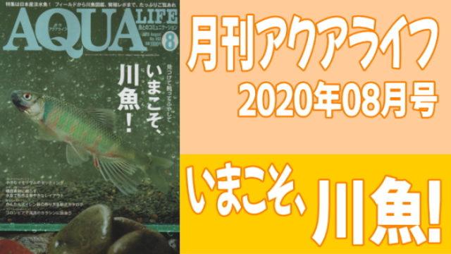 月刊アクアライフ2020年08月号「今こそ、川魚(にったん)! -見つけて、飼って、ふやして-」