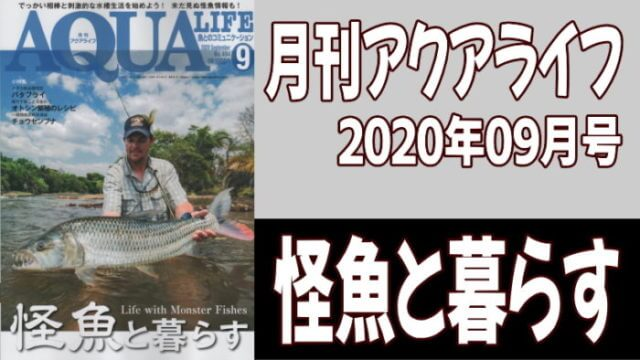 月刊アクアライフ2020年09月号「怪魚と暮らす」