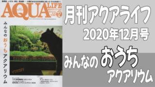 月刊アクアライフ2020年12月号「みんなのおうちアクアリウム」
