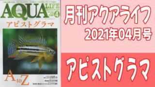 月刊アクアライフ2021年04月号 アピストグラマ