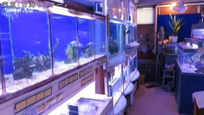 日海センター
