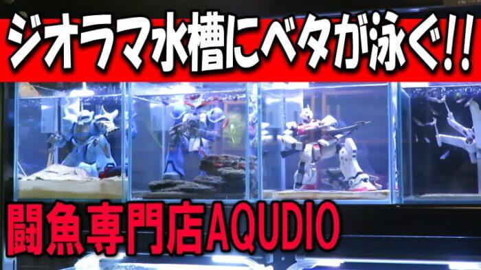 闘魚専門店AQUDIO Youtube
