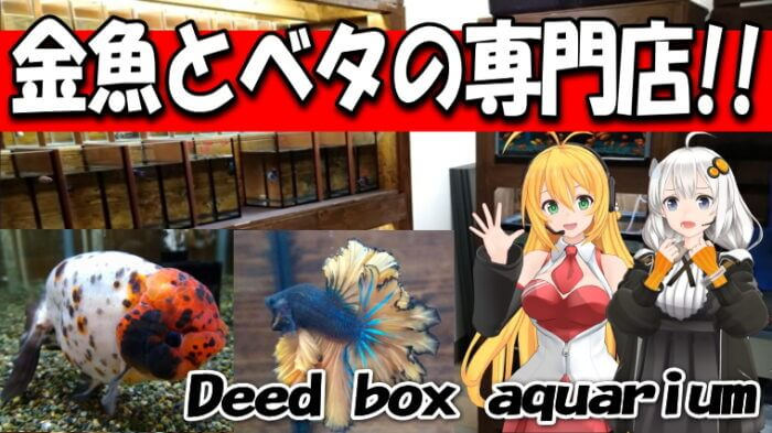 Deed box aquarium Youtube