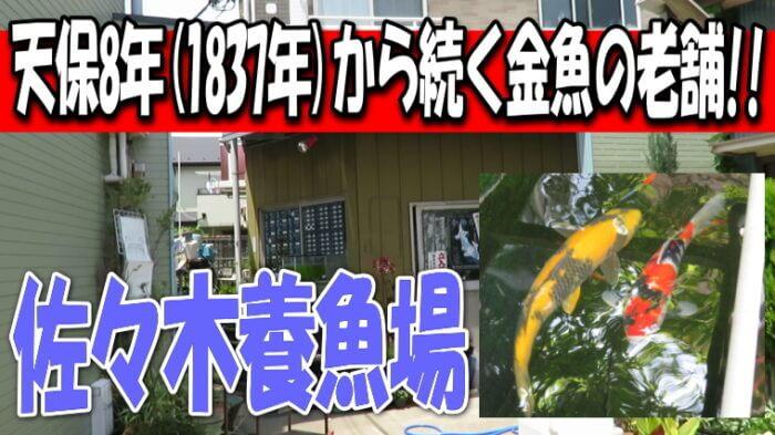 佐々木養魚場 Youtube