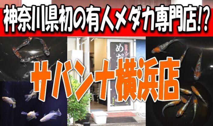 サバンナ横浜店 Youtube
