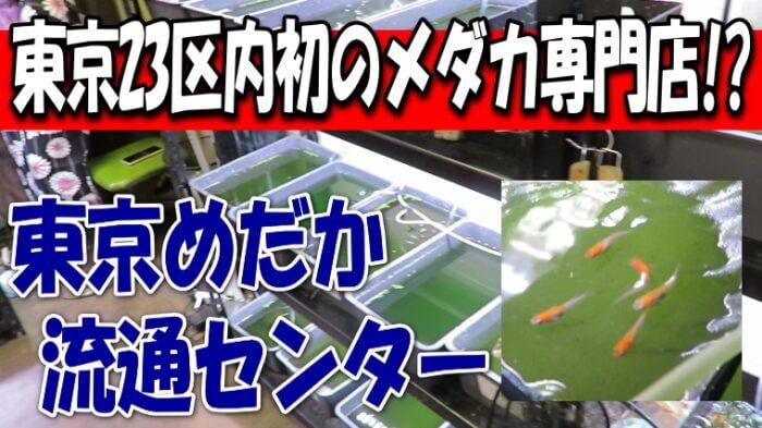 東京めだか流通センター Youtube