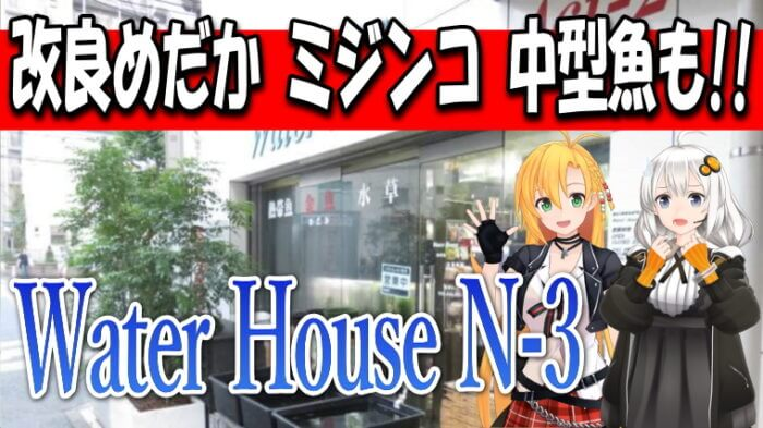 Water House N-3 Youtube