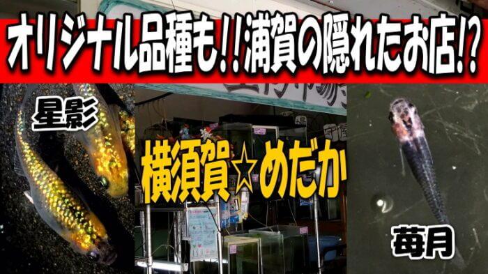 横須賀☆めだか Youtube